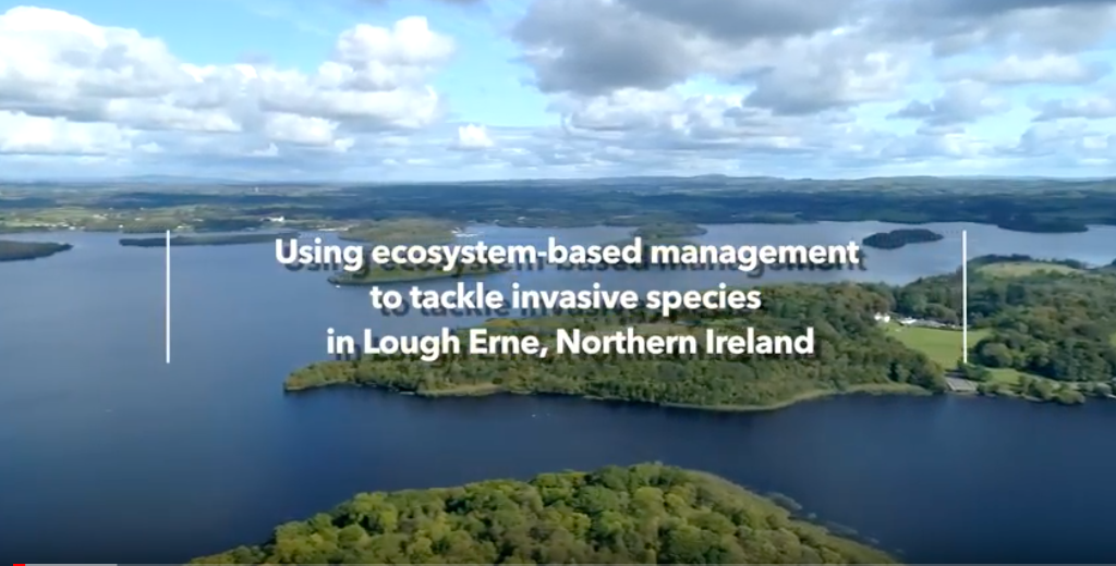 Video screenshot: Using ecosystem-based management to tackle invasive species in Lough Erne, Northern Ireland